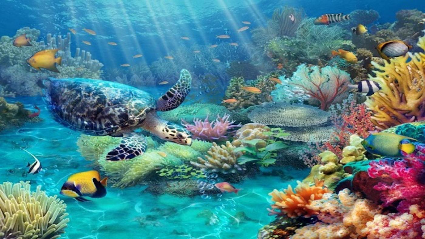 Famous scuba diving spots in Vietnam for adventurers