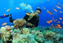 Diving in Nha Trang sea