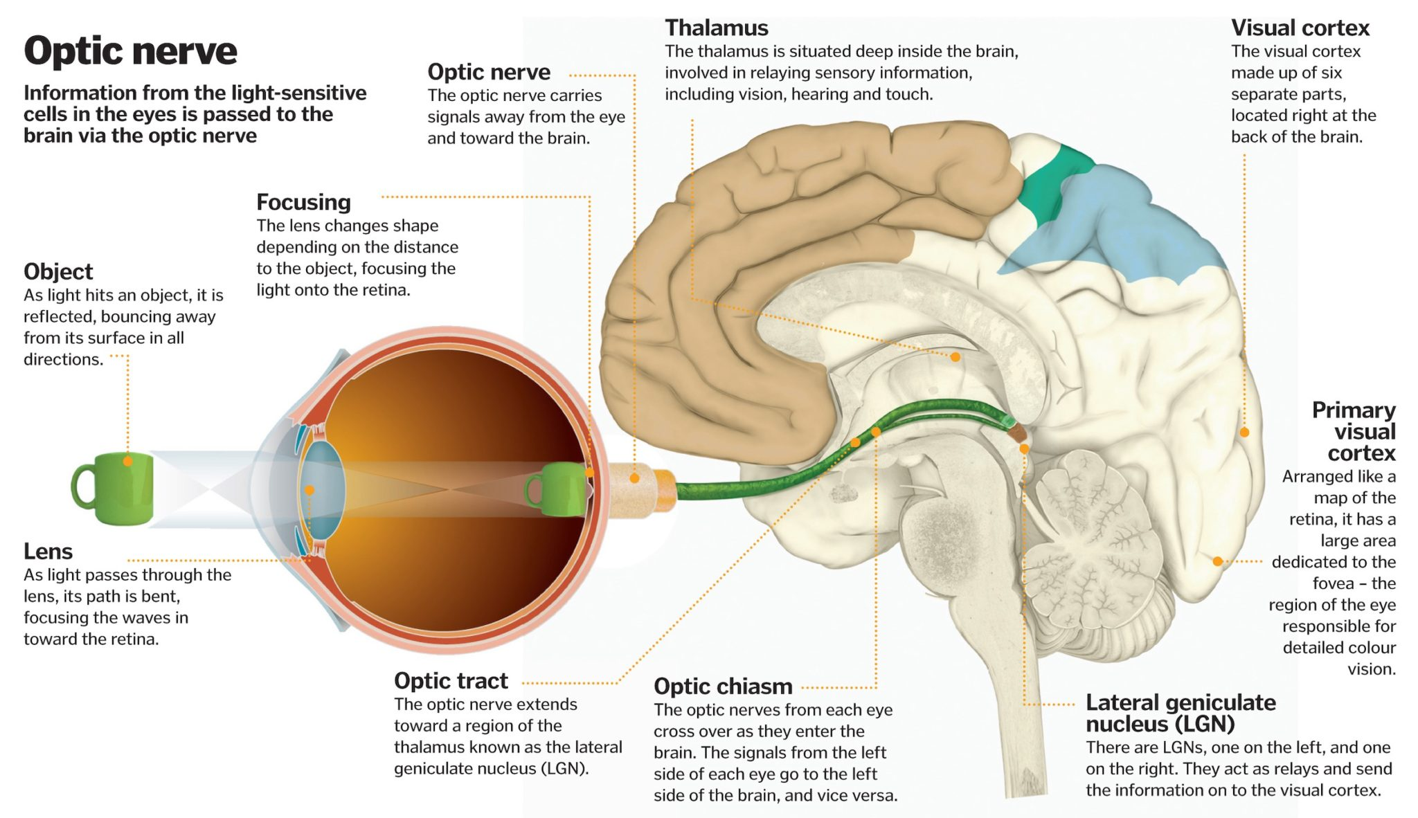 The 3D Visual World – How Brain & Eyes Work To Reconstruct?