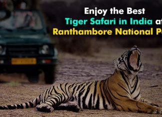 Enjoy the Best Tiger Safari in India at Ranthambore National Park