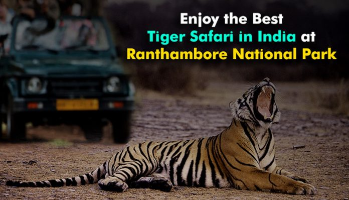 Enjoy the Best Tiger Safari in India at Ranthambore National Park