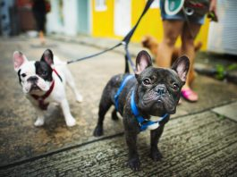Guide to Creating the Best Dog-Walking App