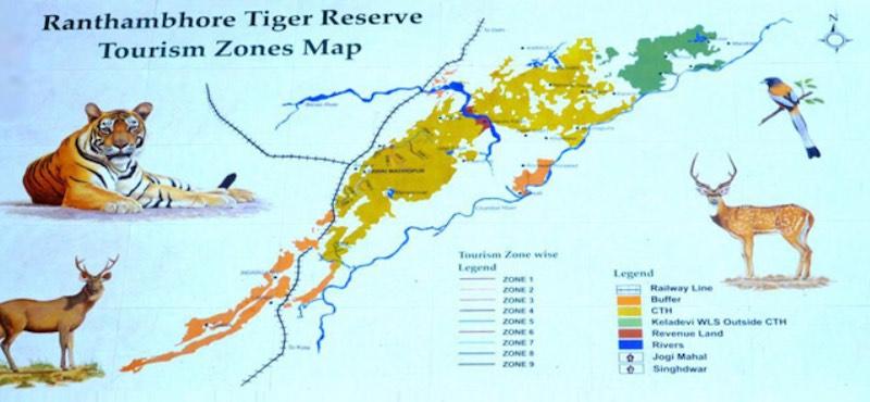 Ranthambore National Park Tigers