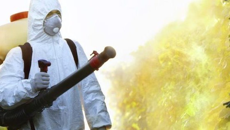 4 Best Advantages Of Choosing Pest Exterminator