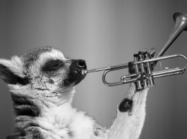 Trumpet as Music instruments