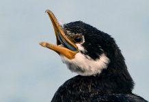 Why Did Birds Lose Their Teeth?