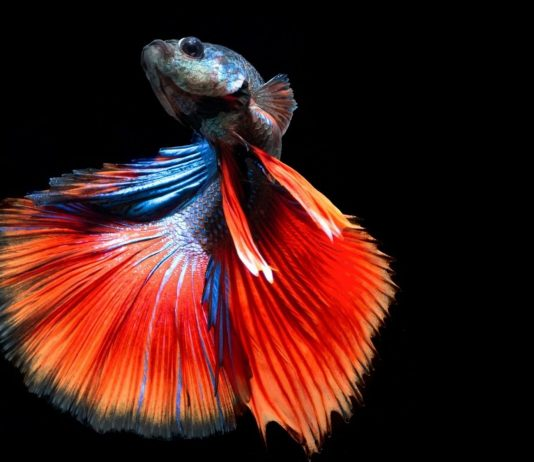 Your Beginner Guide to How to Take Care of Betta Fish