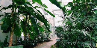 Backyard Design: How to Create a Lush, Jungle-style Garden Haven