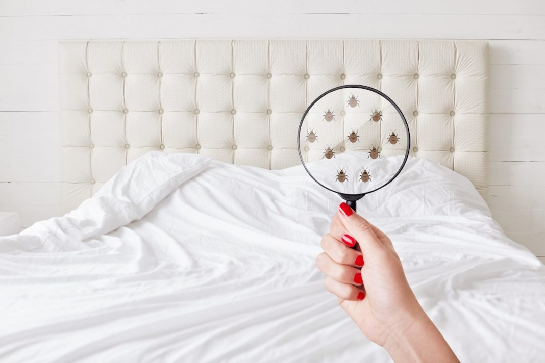 Don't Let the Bed Bugs Bite! 5 Early Signs You Might Have Bed Bugs