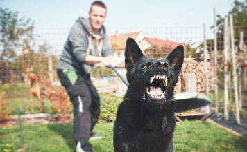 How to Clean a Dog Bite: Preventing Infection and Easing Pain