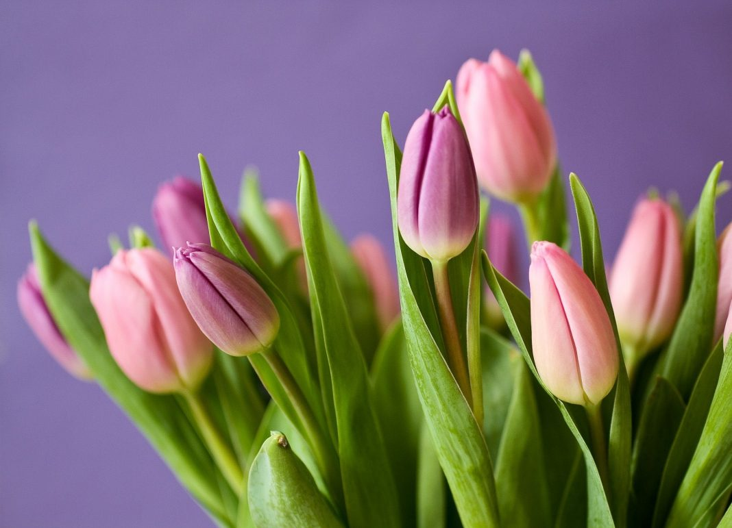The Best Spring Flowers to Plant to Beautify Your Garden