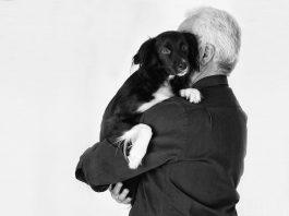 pet dog friend