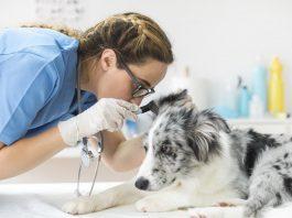 Dog's Ears clean