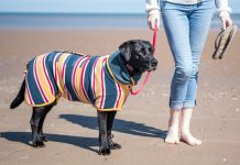 Beach Dog Drying Coat