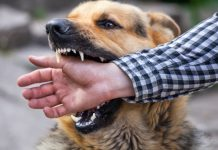7 Tips for Identifying a Good Dog Bite Lawyer