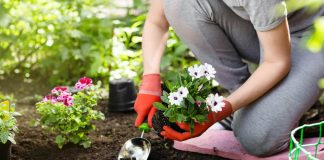 Beyond Lawn Care- 7 Tips for Hiring Reliable Landscaping Services
