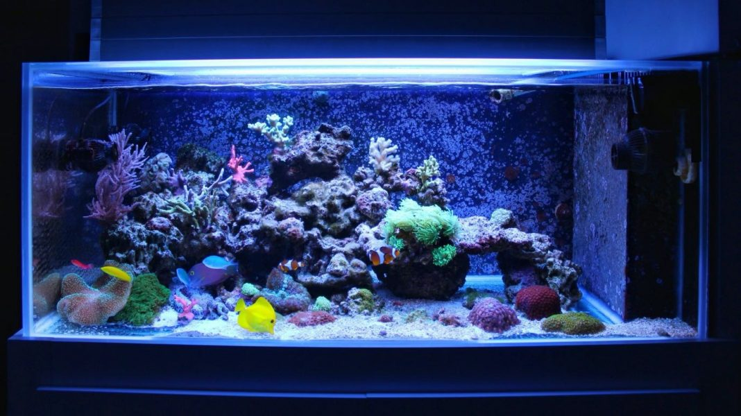 How to Find Cheap Aquariums