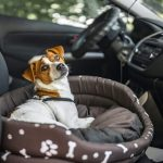 15 Vital Tips for Moving With Pets