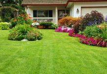 5 Simple Landscaping Tips to Upgrade Your Home's Curb Appeal