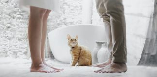 Six Things You Should Never Say to a Cat Owner