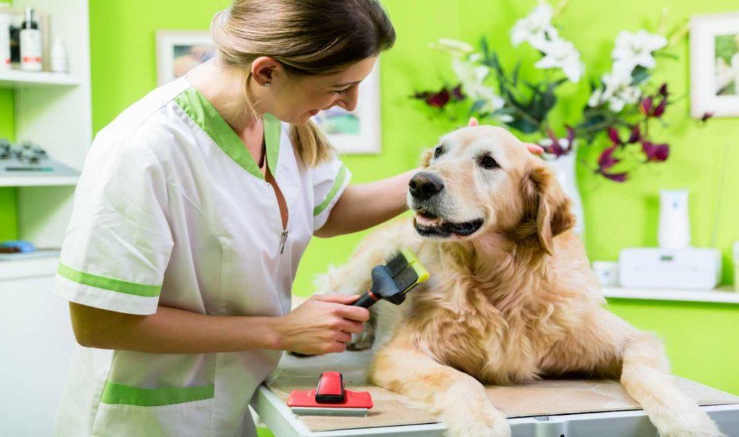 DIY vs. Professional Pet Grooming