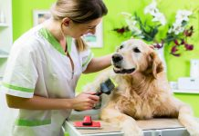 DIY vs. Professional Pet Grooming