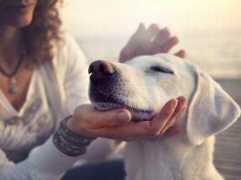 service animal pet dog